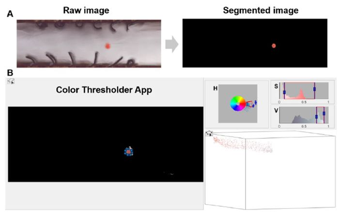 Figure 6. Tracing particle trajectory tracked by a color-based segmentation method. (A) Example of a raw image and its segmented image. (B) Illustration of the color-based segmentation in the HSV color   space using the MATLAB Color Threshold app.