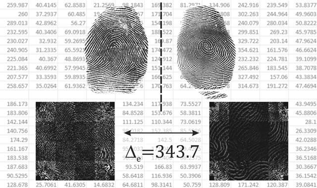 Measuring fluctuating asymmetry in fingerprint scans.