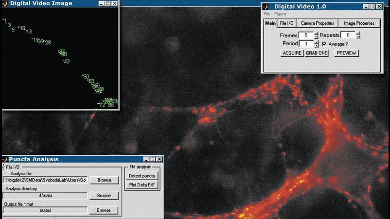 중추 시냅스 이미지를 수집 및 분석하여 시간에 따른 시냅스 전송을 모니터링하는 Image Acquisition Toolbox 응용 프로그램.