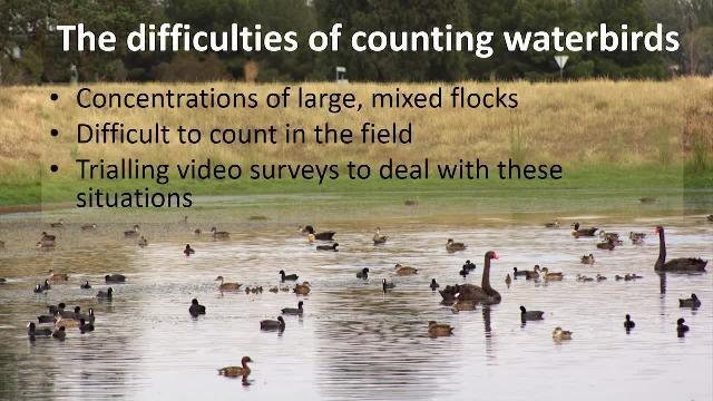 사례 연구: 야생동물 조사의 진보: 물새 비디오 영상을 처리하는 솔루션의 개발