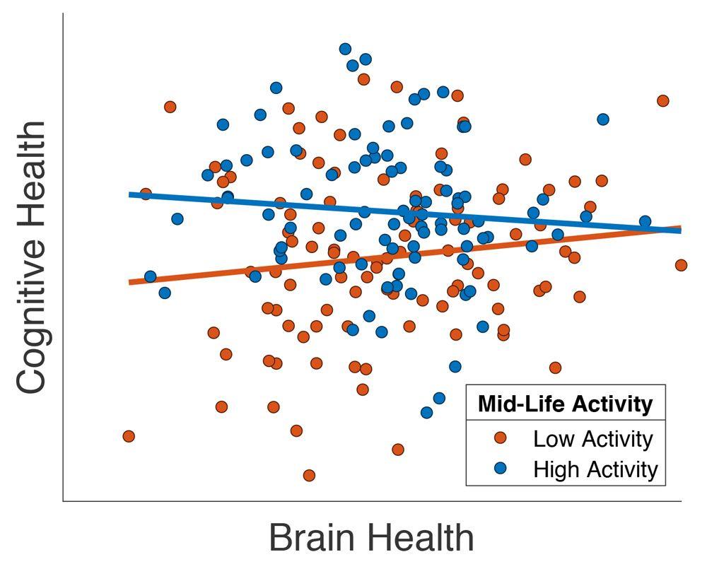중년에 사회 활동을 많이 하는 고령층 환자의 뇌 건강이 개선되었음을 보여주는 그래프