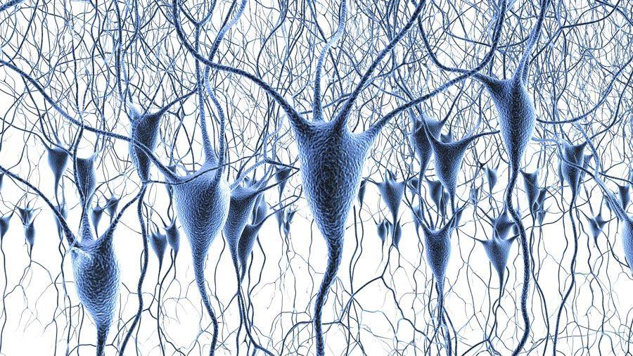 세포 및 시스템 신경과학